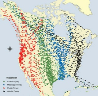 map of canada goose migration